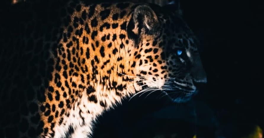 Yggdrasil s'associe à ReelPlay pour sortir les Jaguar SuperWays de Bad Dingo